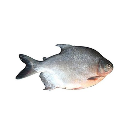 Roopchanda Fish Curry Cut