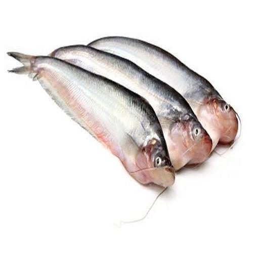 Pabda Fish Whole