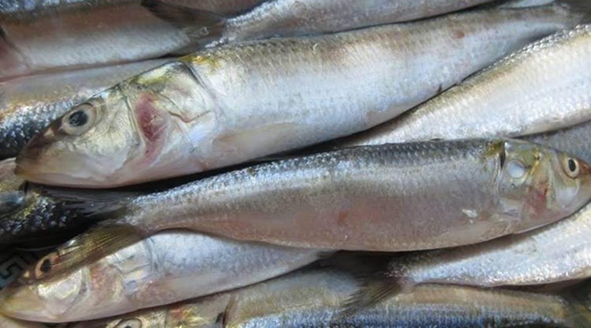Fresh Sardine/Mathi Whole Cleaned